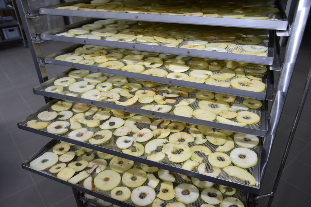 Apple slices in dehydrator